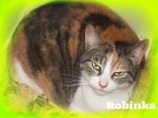 Robinka