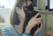 matýskovatá koťata