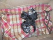 koťata z krabice