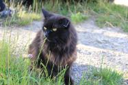 Bella je úžasná kočička