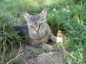 Irenka v trávě